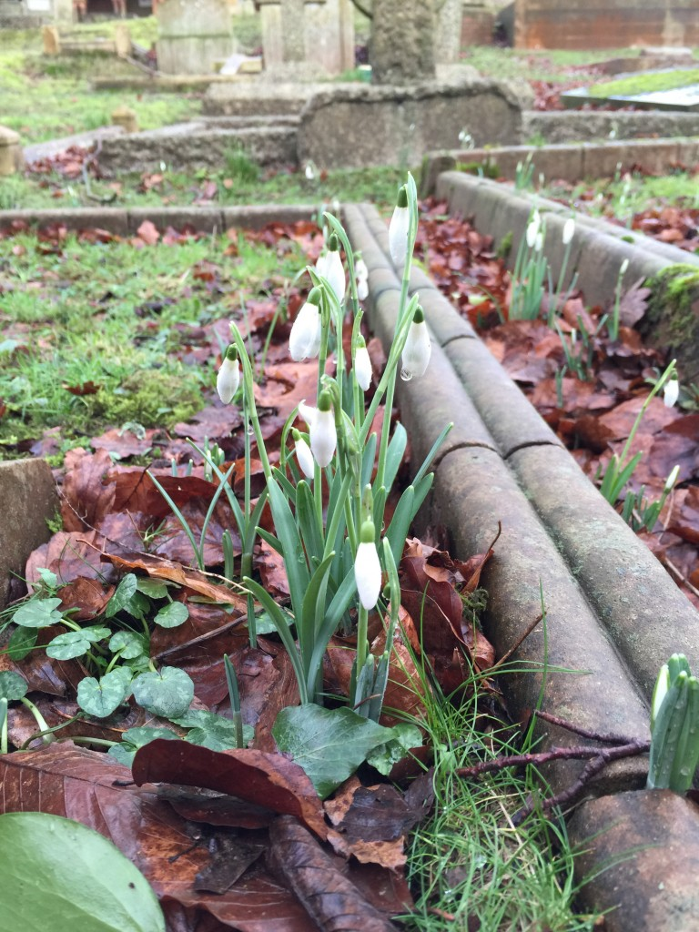 snowdrops at Watts Chapel
