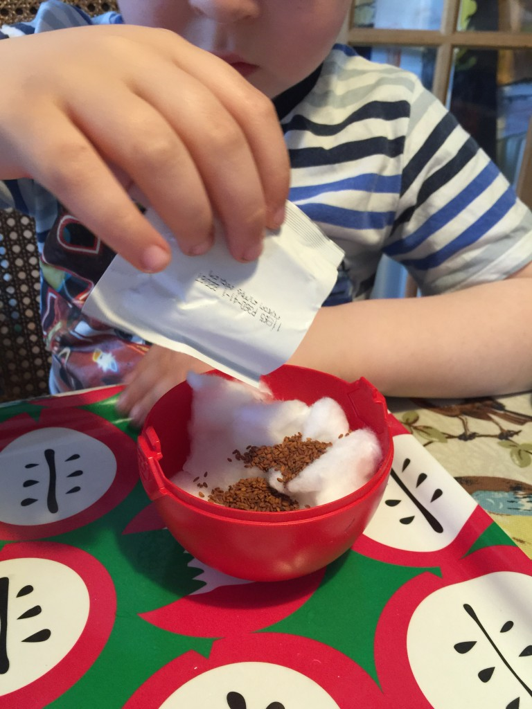 planting cress seeds with kids
