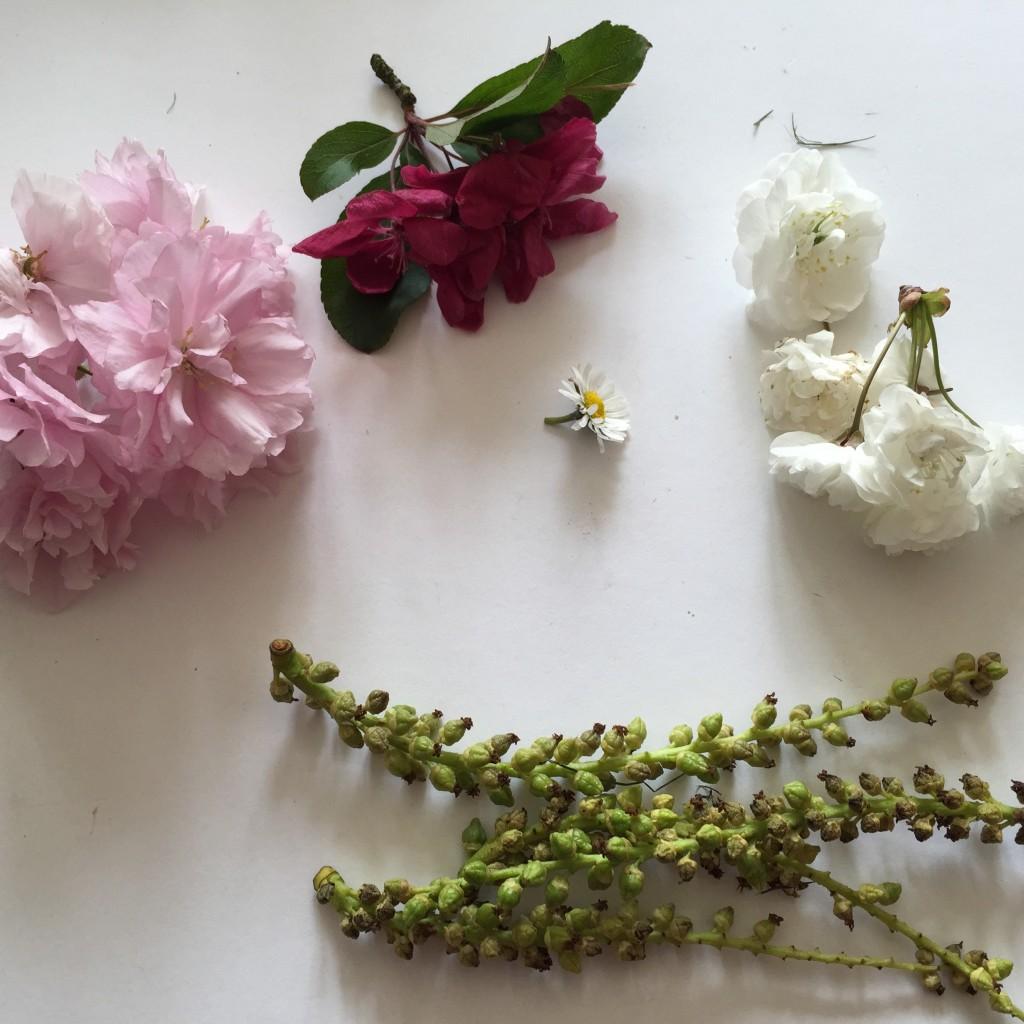 may day blossom
